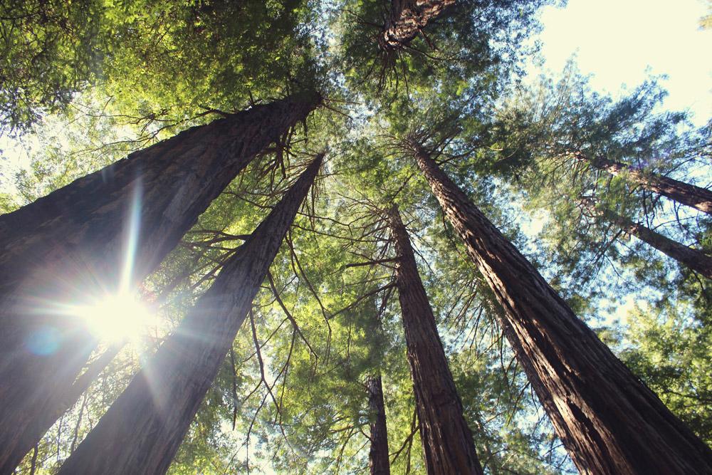geprüfte Holz-Qualität
